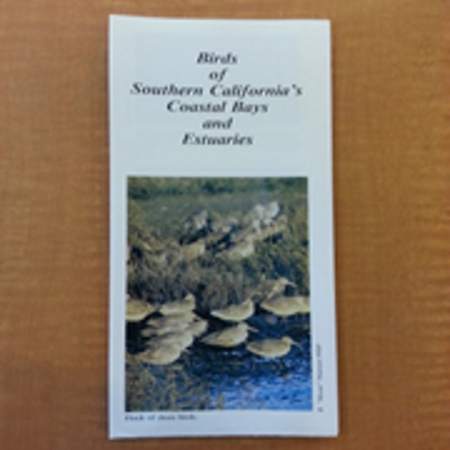 Birds of Southern Californias Coastal Bays and Estuaries