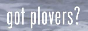 Got Plovers Small Logo_add